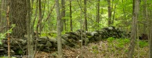 Private woods off Hill Rd., Boxborough