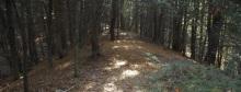 Beaver Brook Valley Preserve